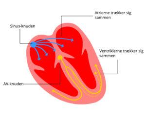 Hjertets elektriske system