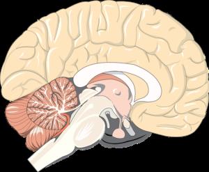 brain-1132229_960_720