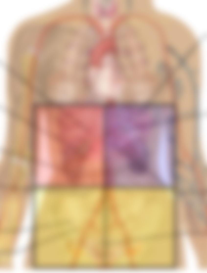 sloeret-abdomen-kvadranter
